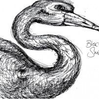 Sam Osborne Sketchbooks Black Swan illustration