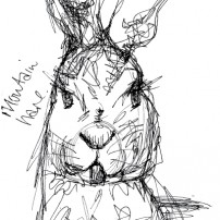 Sam Osborne Sketchbooks Mountain Hare Illustration