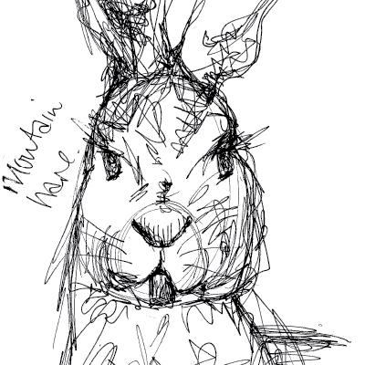 Sam Osborne Sketchbooks Mountain Hare Illustration