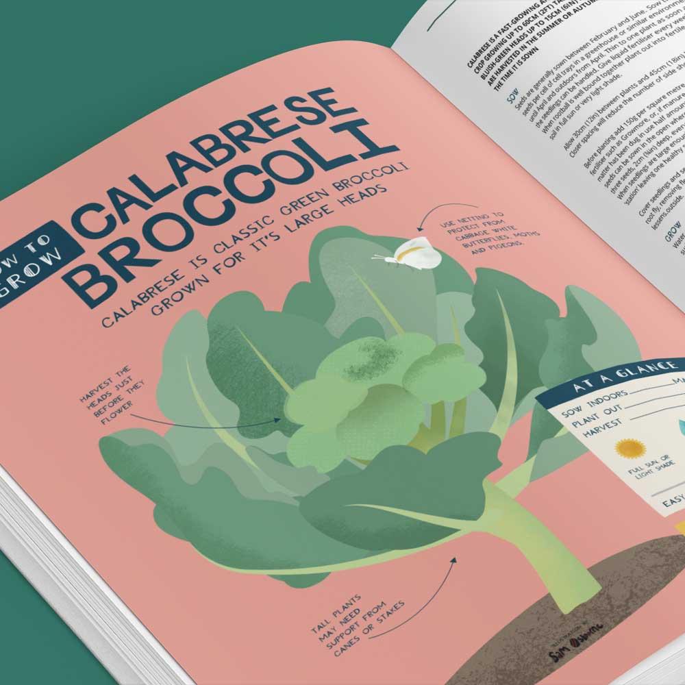 How To Grow Brocolli Book Illustration