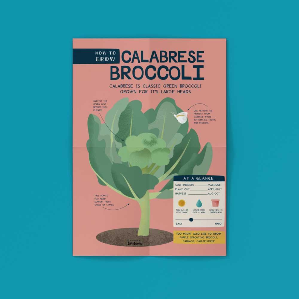 How To Grow Brocolli Poster Illustration